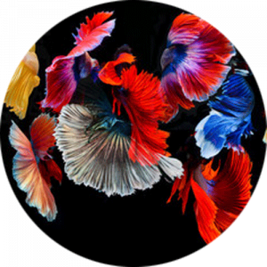 Abstract Vibrant Floral Fish