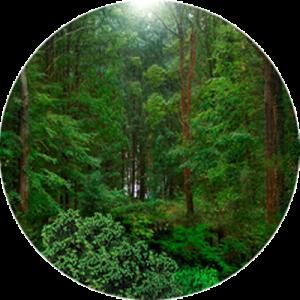 Dense Wild Forest