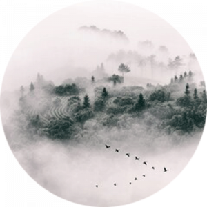 Forest Trees Emerging From Mist