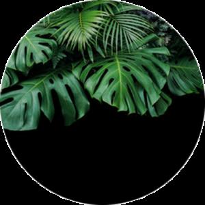 Jungle Shrub
