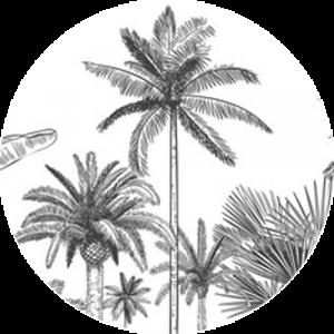 Palms Sketch