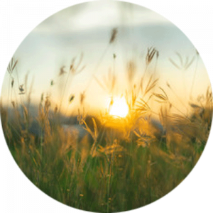 Prairie Grass at Twilight