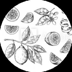 Vintage Citrus Blossom